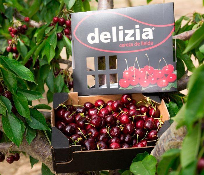 caja cerezas delizia premium 2kg