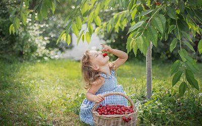 ¿Por qué es bueno comer cerezas?