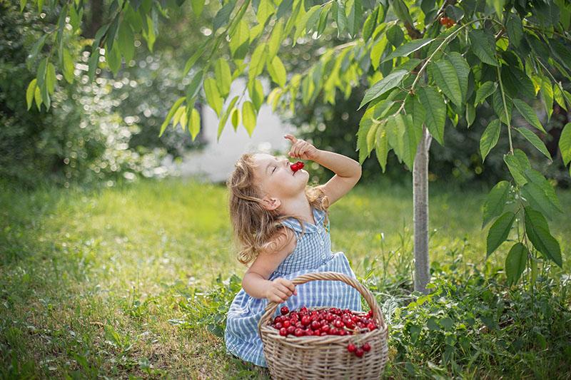 Por qué es bueno comer cerezas