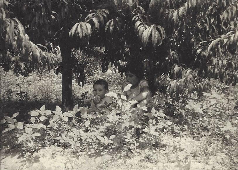infancia familia gilart tradicion cerezas