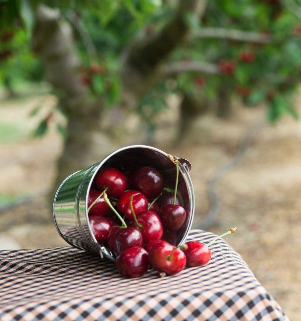 bote con cerezas delizia