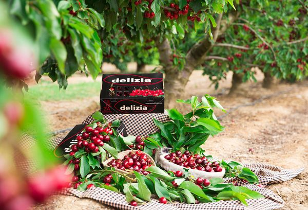 caja y cestas de cerezas gourmet delizia