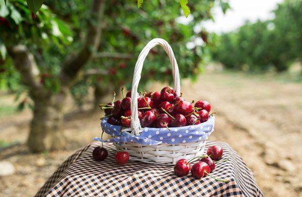 cesta con cerezas premium y gourmet delizia