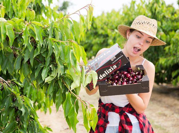 chica con una caja de cerezas delizia